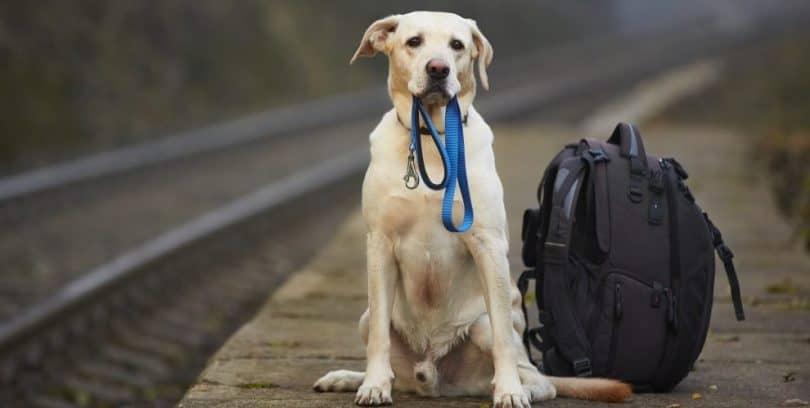 Pet Transport Overseas